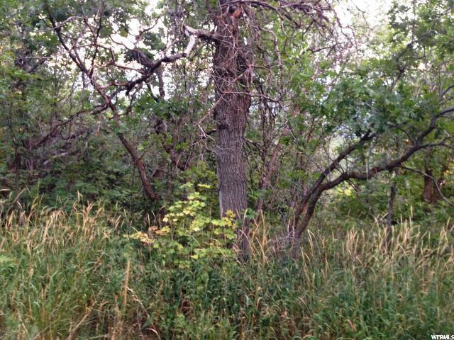 78 N OAK WOOD DR Springville, UT 84663 - MLS #: 1410224