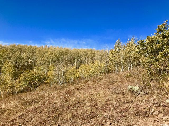 Additional photo for property listing at 2484 S FOREST MEADOW Road 2484 S FOREST MEADOW Road Wanship, Юта 84017 Соединенные Штаты