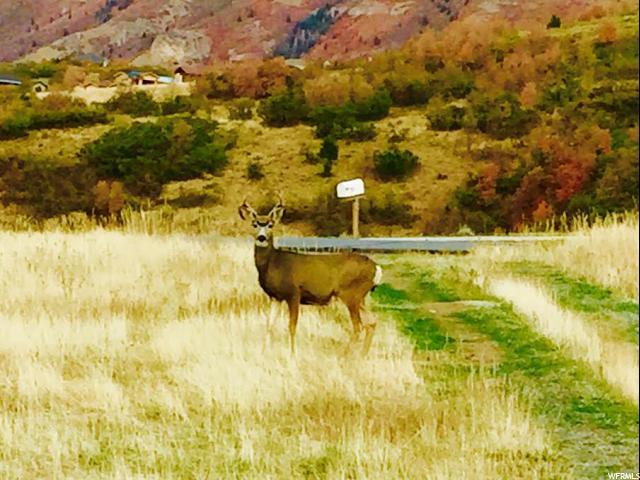 561 E LAKEVIEW DR Elk Ridge, UT 84651 - MLS #: 1495400