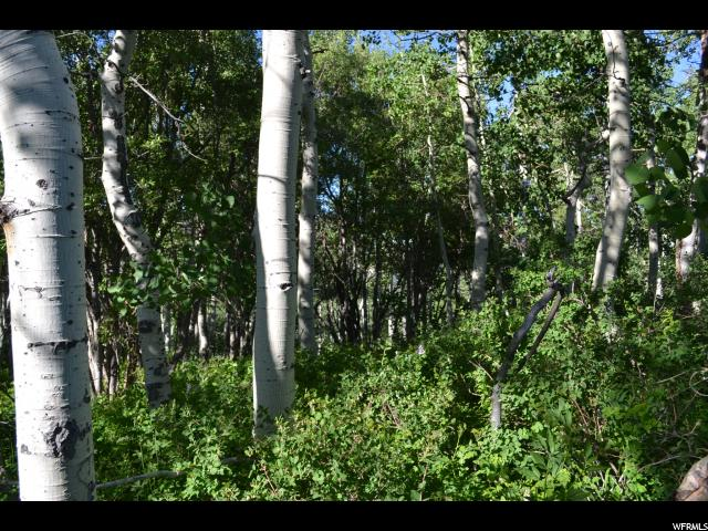 2245 WINDY RIDGE RDG Wanship, UT 84017 - MLS #: 1535782
