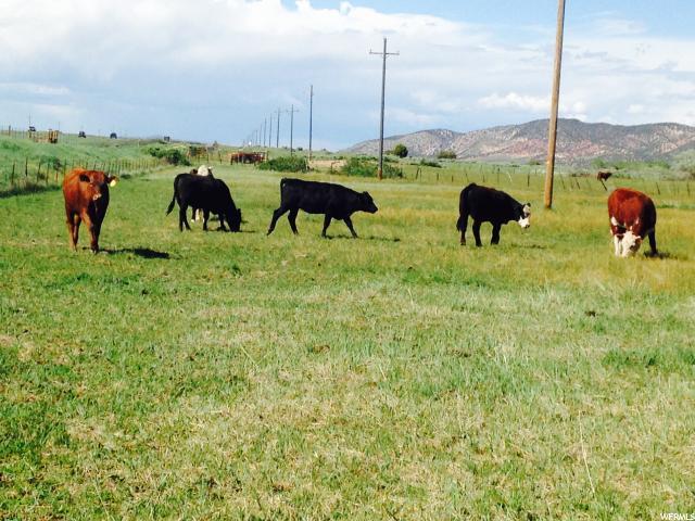 18.09 Acres Outside Kanarravil