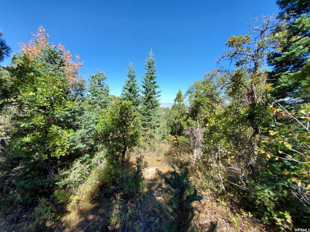 7 B Pine Ridge
