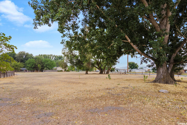 Mature Trees on Property
